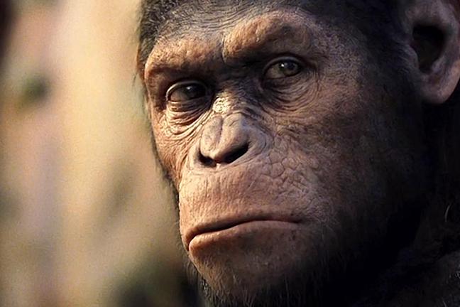 ¿Por qué nos miran los animales? (a propósito de Rise of the Planet of Apes)